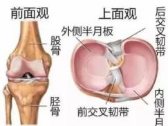 浅谈半月板损伤的原因,症状及预防